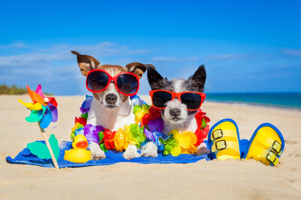 Images Dogs On Beach