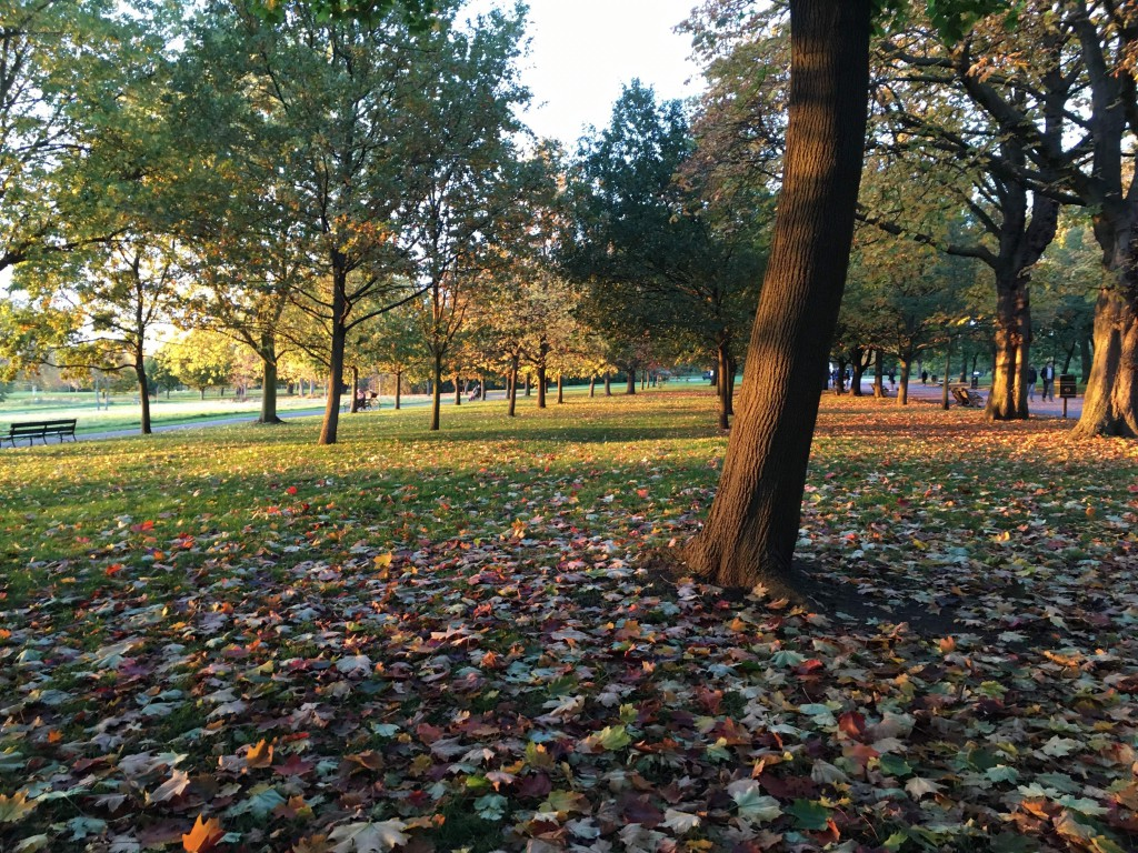 Autumn trees in park, leaves on ground