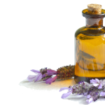 Lavender Oil with lavender plant