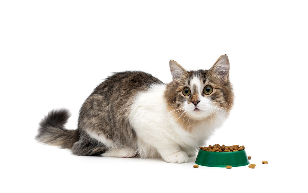 Cats Should Never Eat These Foods
