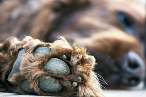 Cute dog paw close up
