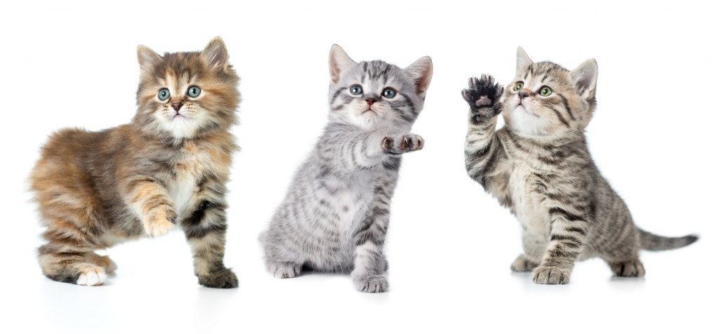 Set of various kittens with paw up isolated on white