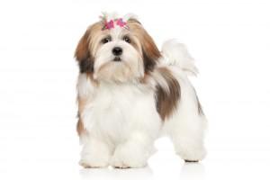 Long Hair Dog