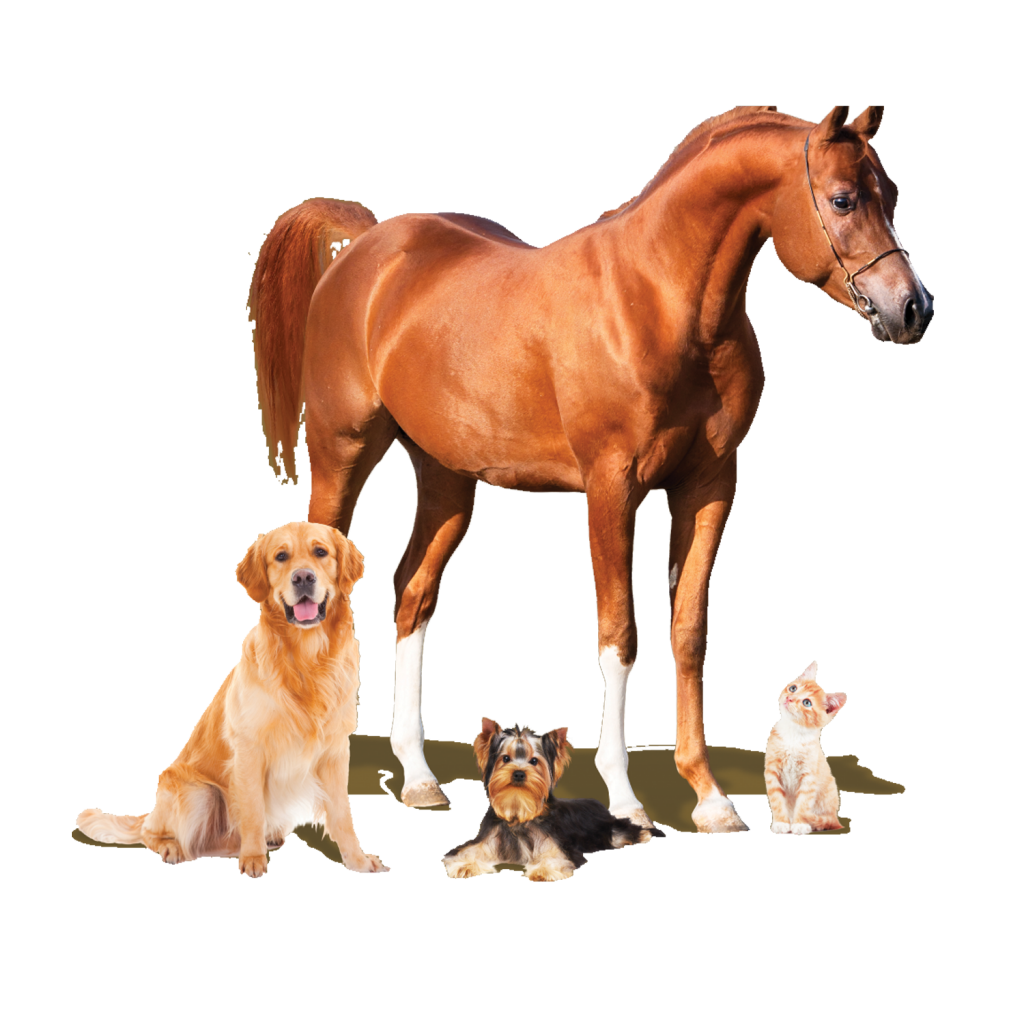 Pet Image-1