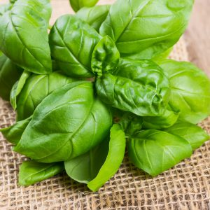 Bundle of herbs basil