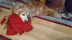 Rudy loves his blankie, he brings it everywhere he goes.